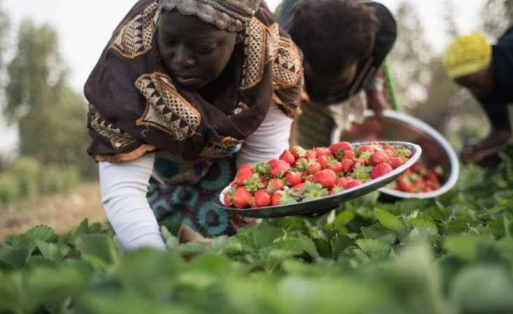 Photo of Nigeria: Agriculture's Contribution to Nigeria's Economy in Q1 'Highest in Two Years