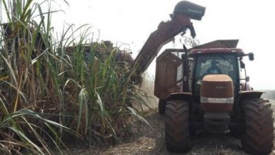 Photo of Cameroon: Volume of Granulated sugar produced in Q1-2020 was up 19.8% YoY