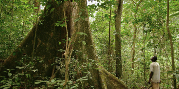 Photo of Togo set to restore 35,000 hectares of forest lands in 2020