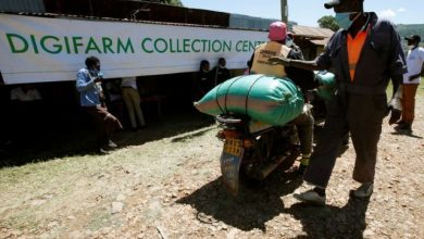 Photo of CREDIT FROM SAFARICOM'S FARMING APP SOWS SEEDS OF CHANGE IN KENYA