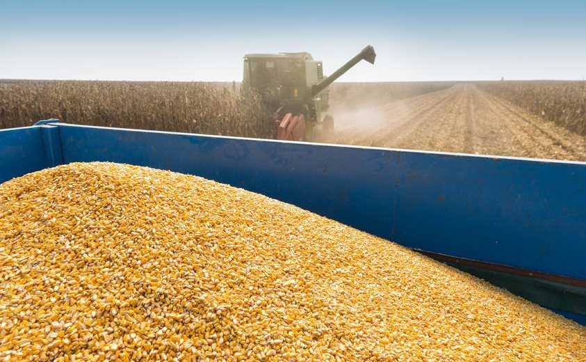 Photo of South Africa can expect bigger summer grains and oilseeds crop