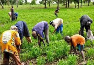 Photo of Increase components of fertilizer subsidy – Peasant Farmers to govt