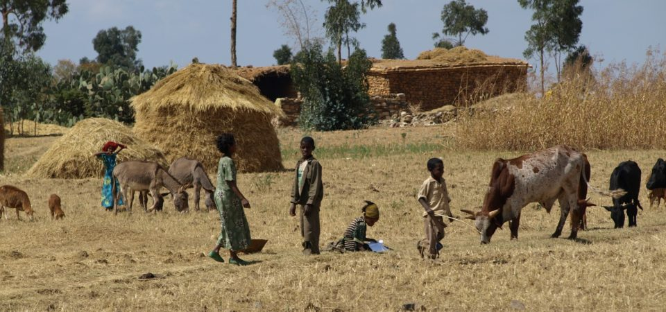 Photo of Why Ethiopia needs to embrace gene-modification technology
