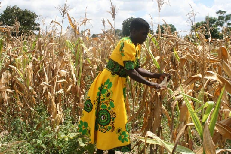 Photo of Digital Agriculture Benefits Zimbabwe's Farmers But Mobile Money Is Costly