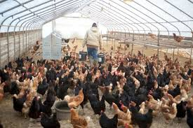 Photo of Is South African poultry back on track?