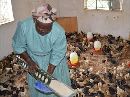 Photo of Poultry farmers in Kenya decry Uganda, Tanzania unfair trade