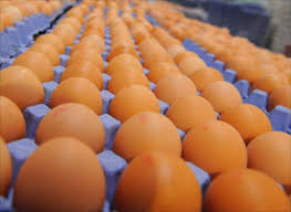 Photo of Egg prices up by Sh100 a tray after three months