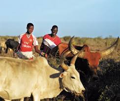 Photo of Technology boosts Kenyan pastoralists