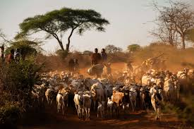 Photo of Pandemic Poses Double Challenges for African Pastoralists