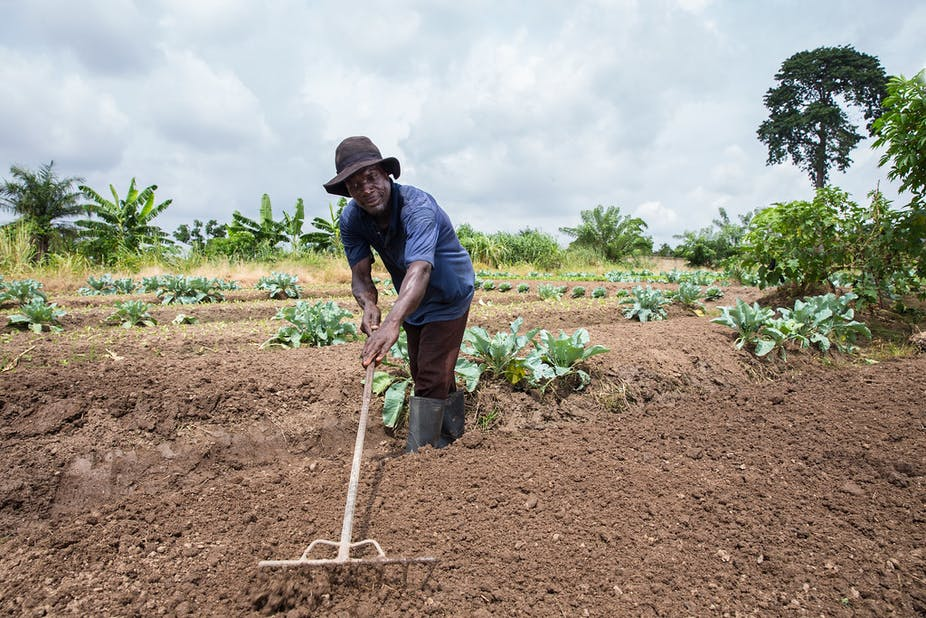 Photo of Urban spread is turning the lives of Ghanaian farmers upside down