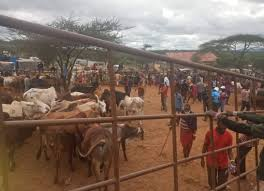 Photo of Livestock Markets In Kajiado Closed