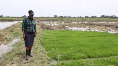 Photo of Sh5b irrigation project brings hope to once hardship hamlet