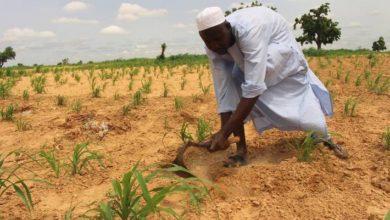 Photo of FAO Nigeria gets new country representative