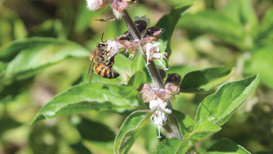 Photo of Illegal application of pesticides killing our bees