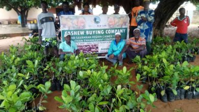 Photo of Cashew Farmers Receive Free Seedlings To Boost Production