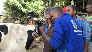 Photo of Global animal health company trains Ethiopian farmers, professionals