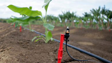 Photo of Kilifi Smallholder Irrigation Scheme Changing Livelihoods