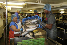 Photo of Small-scale fisheries key to economic growth