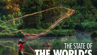 Photo of Latest report on the state of the world's forests