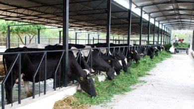 Photo of Kenya: Nakuru Farmers Want More Funds Injected Into Dairy Sector