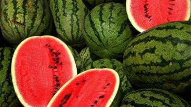 Photo of Melon and watermelon: Less water consumption, better uniformity of plants