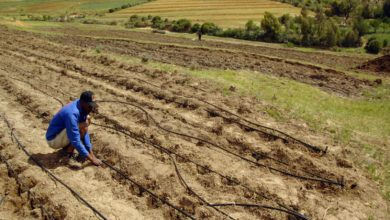 Photo of Lesotho and IFAD joint project to improve livelihoods of vulnerable small farmers