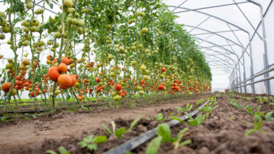 Photo of Kenya: Horticulture Sector Gets Sh1.5bn Boost to Ensure Quality Produce