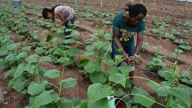 Photo of Tanzania: Postharvest innovations key to raising youth involvement in horticulture