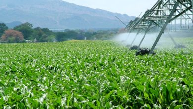 Photo of CLIP organises sustainable agricultural, business forum