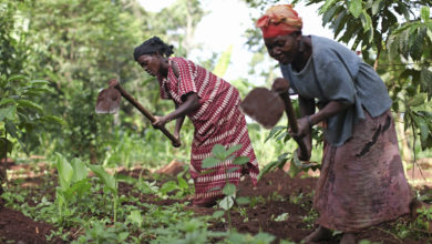 Photo of Uganda to benefit from €40m facility launched to support African farmers