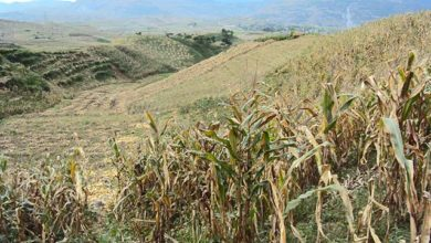 Photo of Economy: Drought threatens Morocco's agriculture