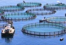 Photo of Why aquaculture and agriculture must work in tandem