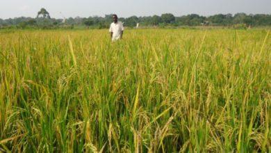 Photo of Tanzania: Major Inputs Stimulus to Boost Small Scale Farmers