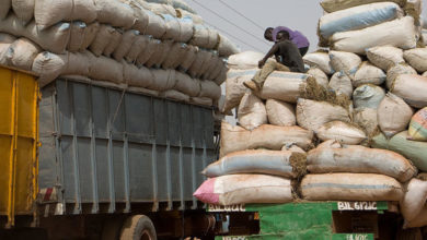 Photo of Gambia loses tons of groundnuts to Senegalese wholesalers