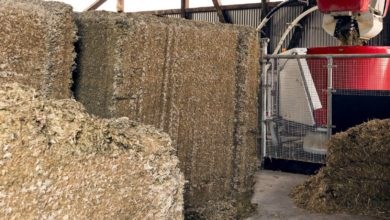 Photo of Hot weather does not affect the quality of silage blocks