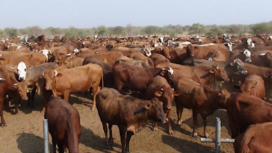 Photo of FMD outbreak detected at Olukonda