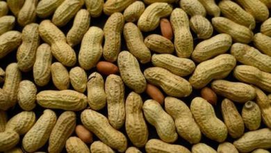 Photo of Senegal lifts ban on peanuts export