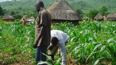Photo of Help for Nigerian small-scale farmers to improve food security and combat poverty in face of COVID-19