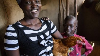 Photo of Hatching Hope for sustainable poultry expands into Kenya