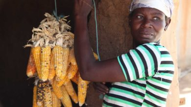 Photo of Equality for Ghanaian Women in Agriculture