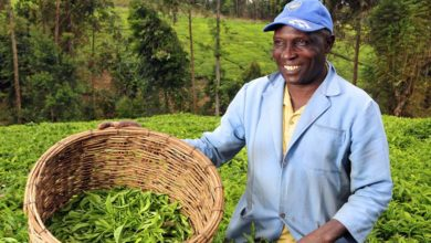 Photo of Agripoa: Improving Agriculture in Tanzania