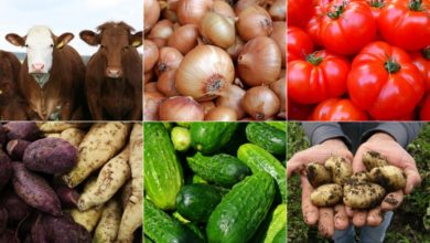 Photo of Namibia Turns to Urban Agriculture…as Food Security Takes Centre-Stage