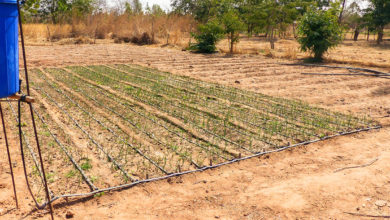 Photo of Innovation: Burkina Faso is at the forefront of micro-irrigation