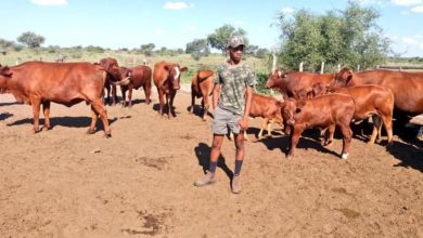 Photo of Committed to improving the productivity of livestock farmers