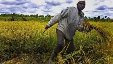 Photo of Unlock and unblock: twin track to boost food security in Africa
