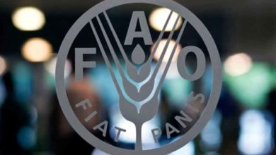 Photo of FAO supports food-farming chain development in Angola