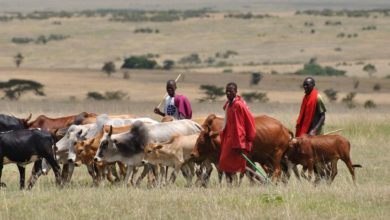 Photo of Fulani herders have right to do business anywhere in Nigeria