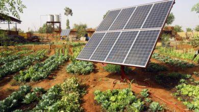Photo of UGANDA: FAO provides Kalungu with four solar-powered irrigation systems
