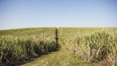 Photo of Regenerative farming is vital to ensure food security