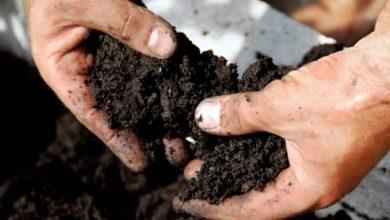 Photo of Good soils, good yields
